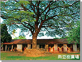 Yu-Dou tree performance square