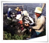 Fishery Wetland