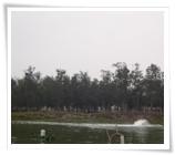 Mangrove(Fish pond)