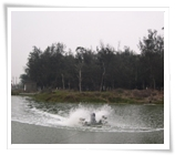 Mangrove(Waterwheel)