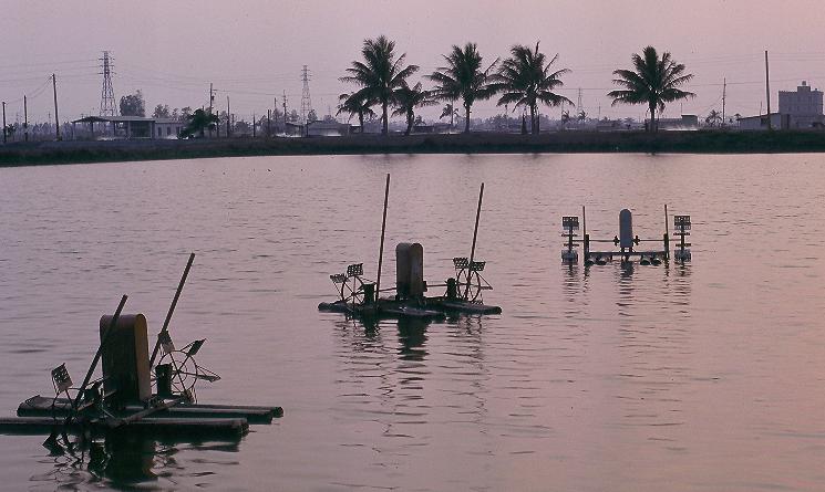 湖內魚塭風景照片