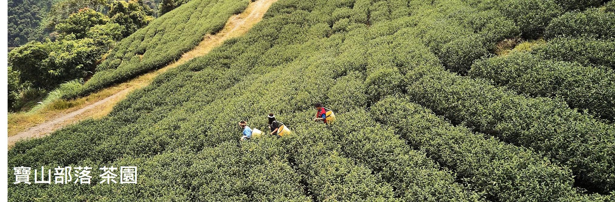 寶山部落 茶園
