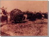 Photo of a sugar factory in the early days
