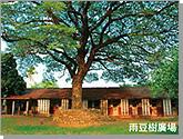 Yu-Dou tree performance square