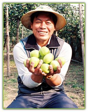 果農豐收的喜悅 (棗子)