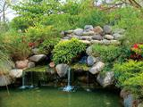五林國小生態池
