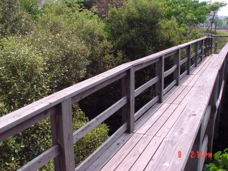 前往紅樹林的橋