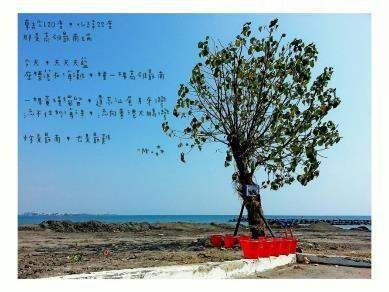市境之南樹