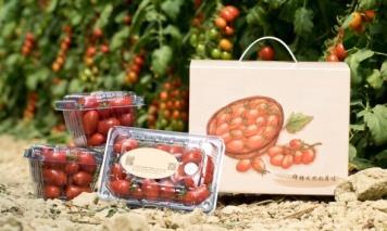 小番茄禮盒