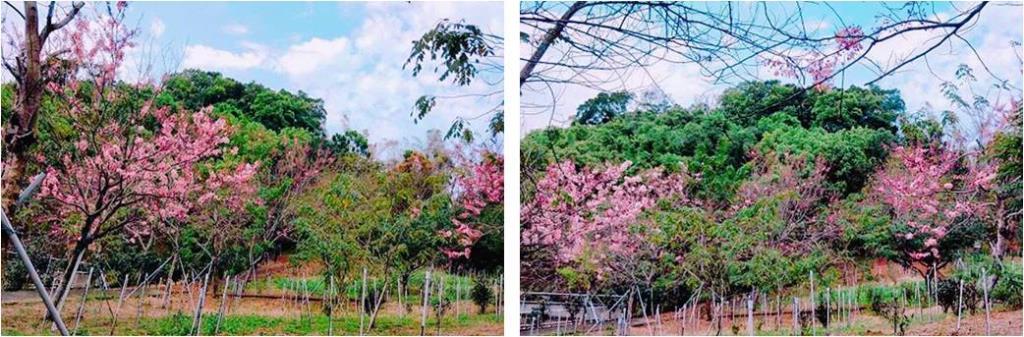 花旗木庭園一景