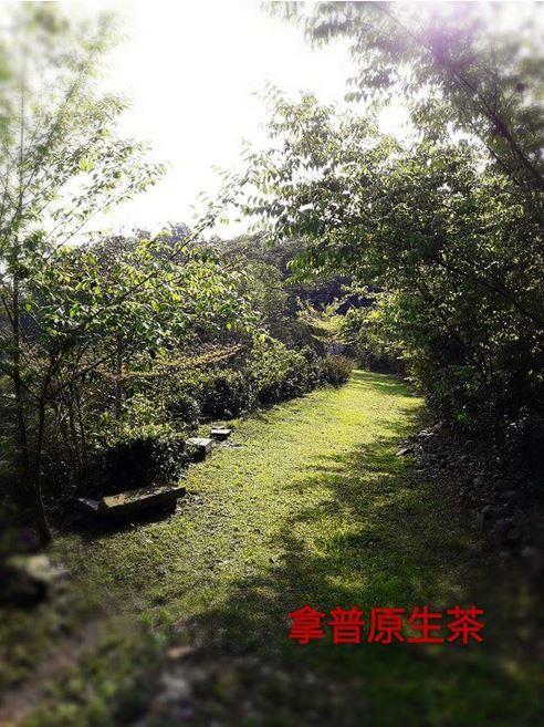 拿普原生茶有機農場