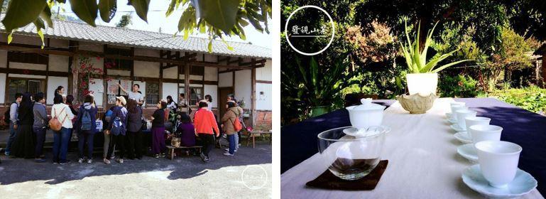 山茶FAXIAN SHAN CHA