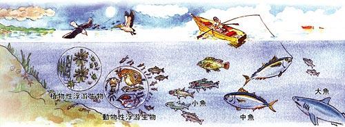 海中食物鏈