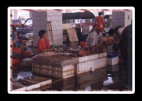 觀光漁市交易場所